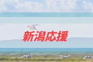新潟を応援したい企画(仮)